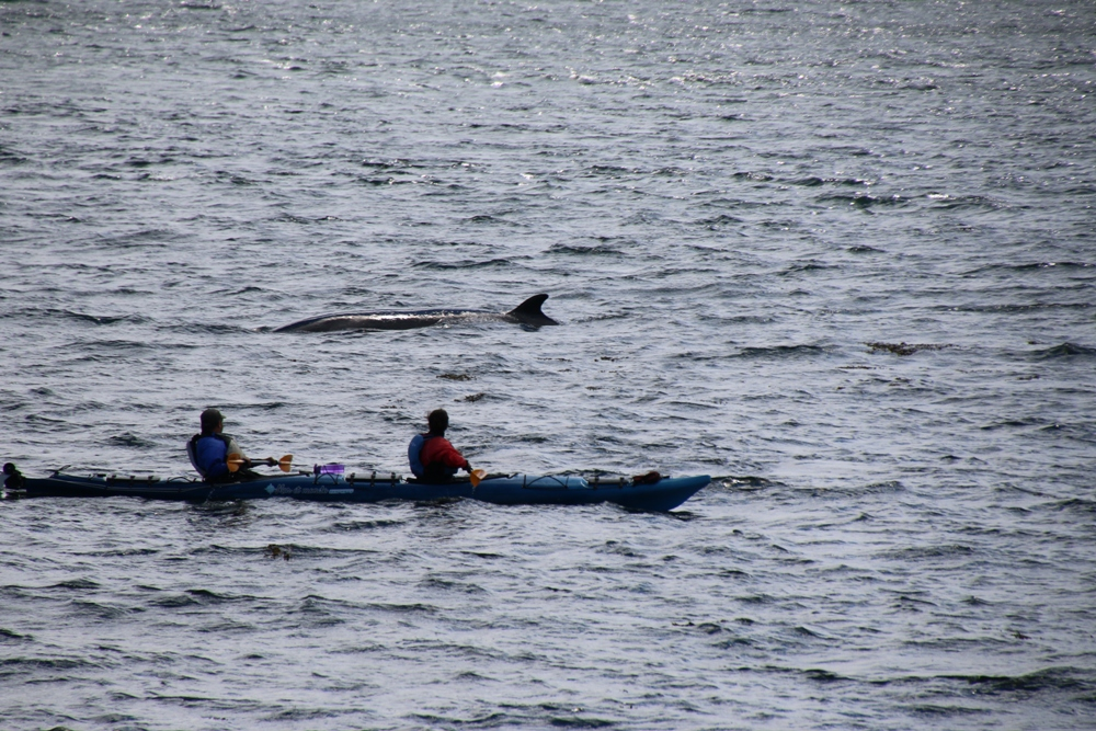 whale and kayak