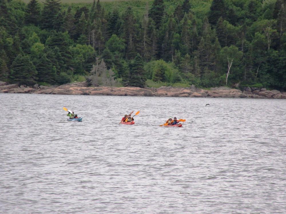 whale watchin in kayak
