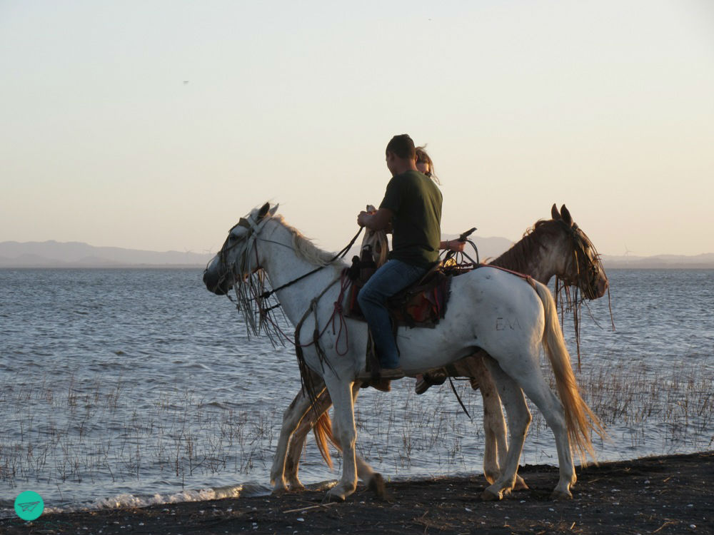 horses at sunddown