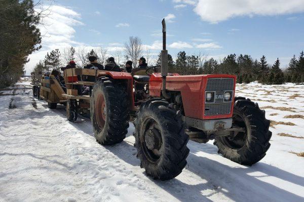 tractor at Quinn Farm