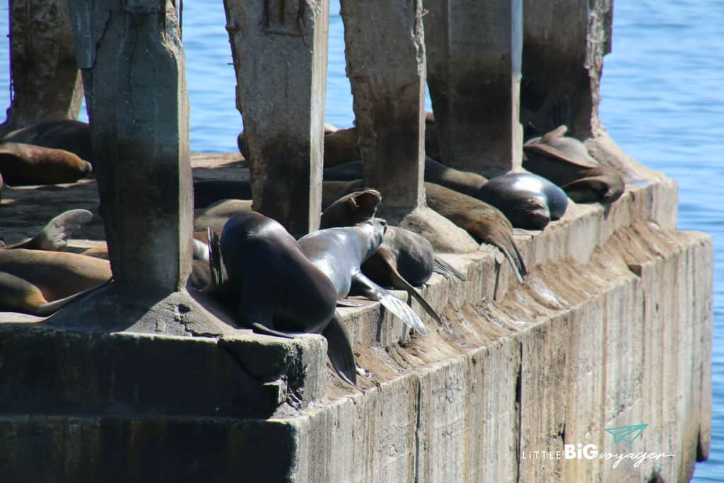 sea lion colony at the port of Valpariso