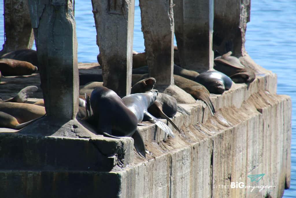 sea lion colony at the port of Valpariso